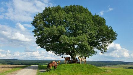 Pferdewaage Baum